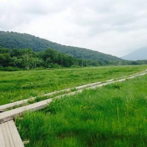 尾瀬の木道景色