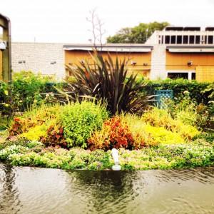 プロトリーフ屋上庭園