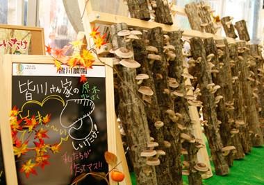 東京ハーヴェスト 六本木ファーム