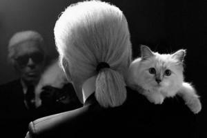 セレブ猫シュペット