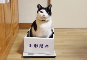 ほっこり癒しの猫たち
