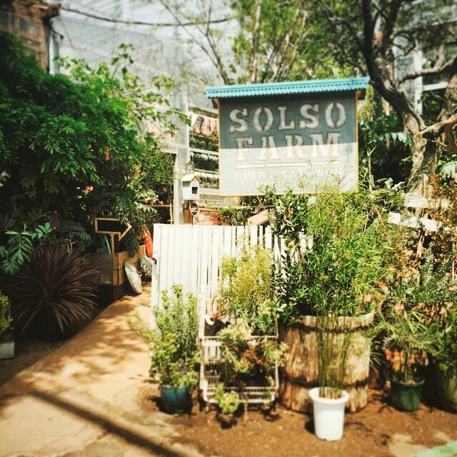 ソルソファーム ブログ レポート