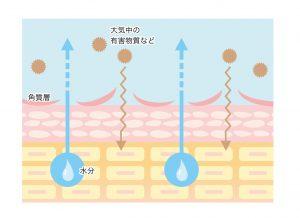 ダメージ肌 日焼け 化粧水 ディセンシア 敏感肌 肌炎症
